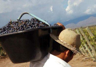 Una inesperada helada afectará un 40% de la producción de uva