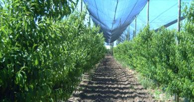 fondo agricola