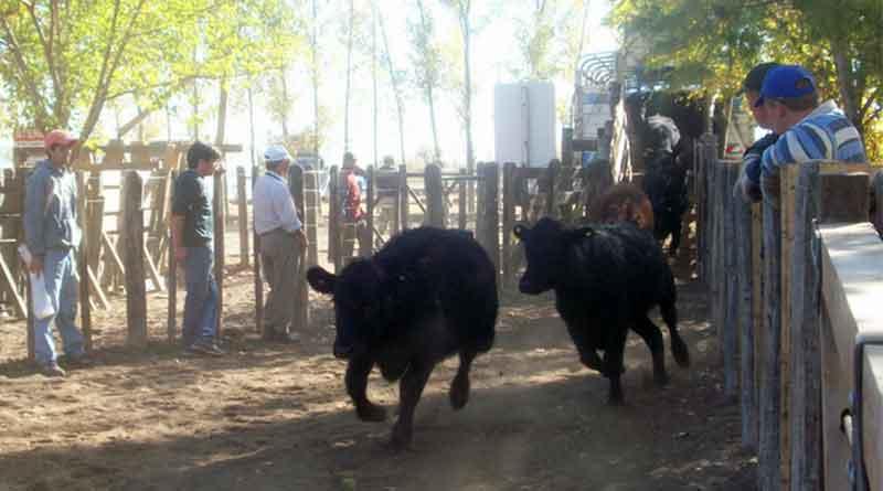 ganadería agua vacas