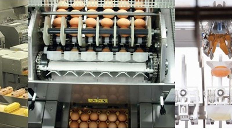 Ovo Alvear Huevos
