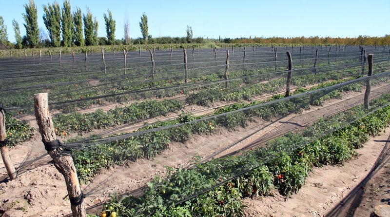 Invitan a productores a participar del fideicomiso del tomate