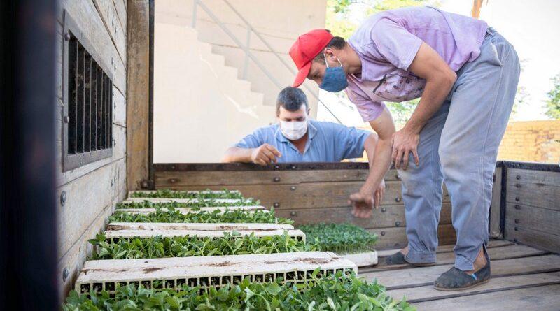 Culminó el Programa de Entrega de Plantines de Tomate